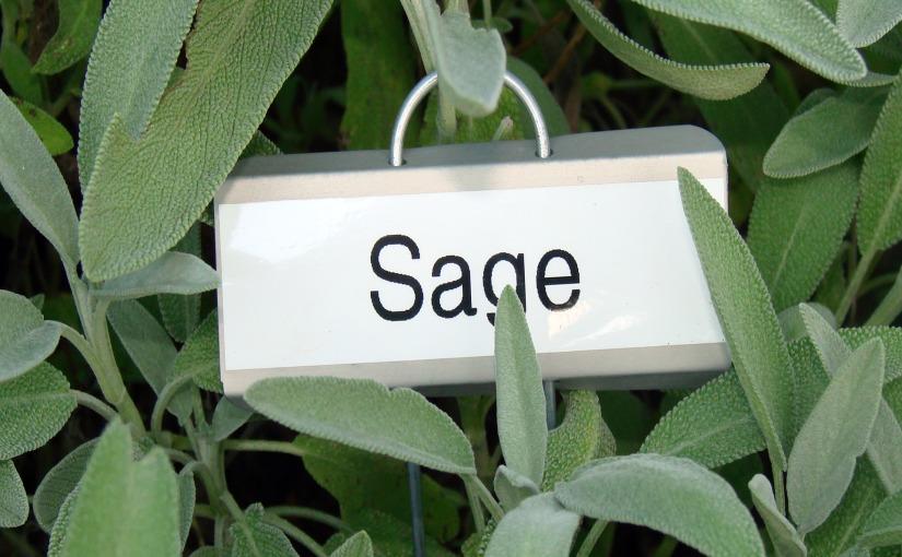 Home Remedies: SageLeaves