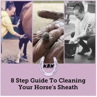 8 Step Guide To Cleaning Your Horses Sheath