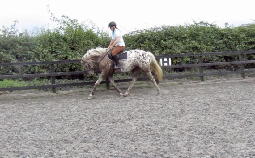 The Physio & the Saddle Fitter ~ Fixing Coco'sBack