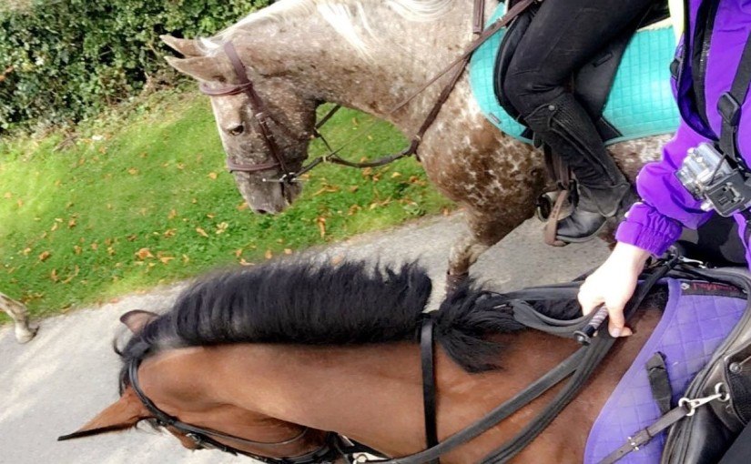 Happy Hacking with Dante &Coco