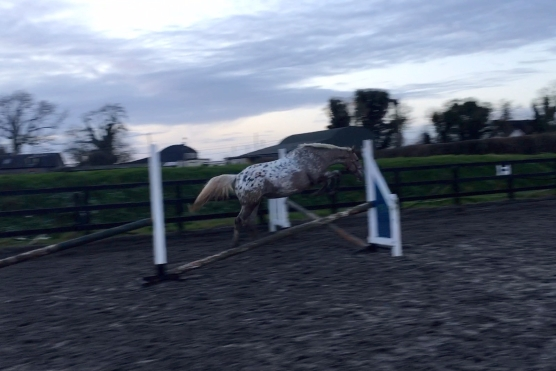 Coco loose jumping