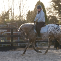 Exercises to Help BuildYour Horse's Weak Hind End