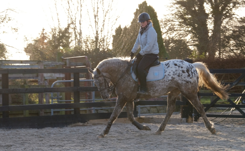 Exercises to Help BuildYour Horse's Weak HindEnd