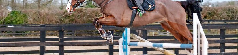 8 Common Jumping Questions Answered by Coach SueByrne
