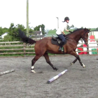 How To Keep Your Horse From Lifting His Head Up After He Jumps