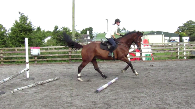 How To Keep Your Horse From Lifting His Head Up After HeJumps