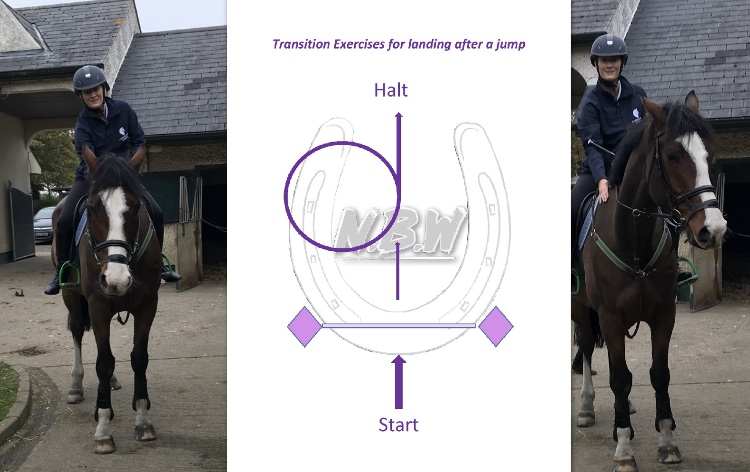 Transition Exercise's For YourHorse