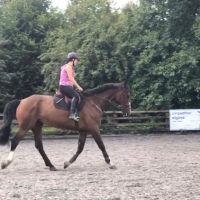 Top 5 Flatwork Exercises that Everyone Must Do!
