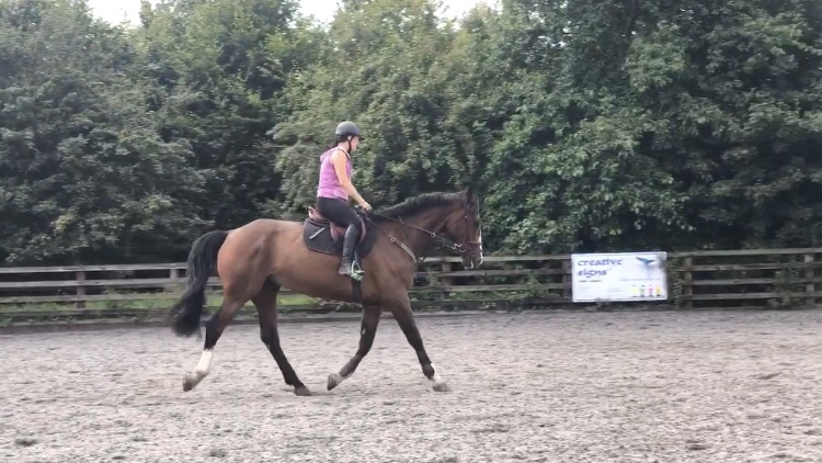Top 5 Flatwork Exercises that Everyone MustDo!