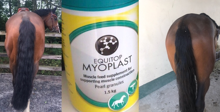 Product Review – EquitopMyoplast