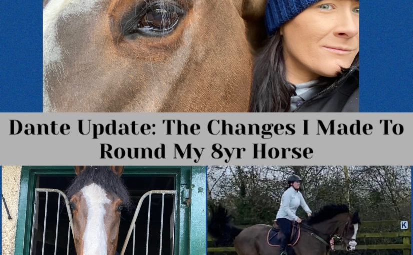 Dante Update: The Changes I made to round my 8yr oldhorse